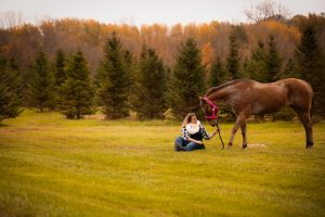 Fall equine photography in River Falls WI with Babe the Horse bending down
